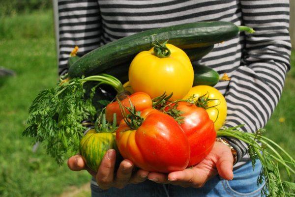 Fresh Wagon brings fresh fruits and veggies to an area near you